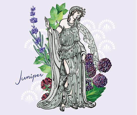 juniper2-22